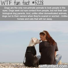 And this is why I love dogs. Care about ALL animals but love dogs Amor Animal, Mundo Animal, I Love Dogs, Puppy Love, Mans Best Friend, Best Friends, Funny Animals, Cute Animals, Rock Animals