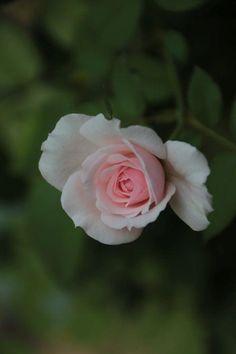 夏終盤…。 - 綺麗な花には棘があるかもしれない…