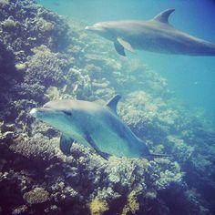 #delphins #swim