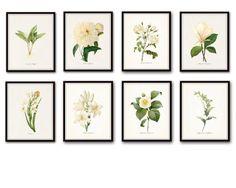 Redoute White Botanical Print Set No. 8 - Canvas Art Prints