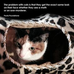 """The problem with cats is that they get the exact same look on their face whether they see a moth or an axe-murderer."" - Paula Poundstone"