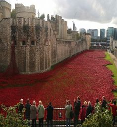 Red Poppies all around the moat at the Tower of London