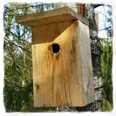 Mitt liv som Toril :o): Fuglekasse 2015 #1
