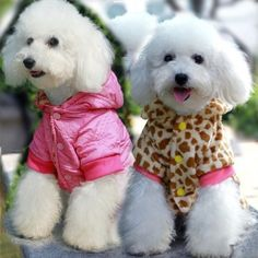 Cute Dogs Pet Clothing Double Sided Pink SuitSize 12 >>> To view further for this item, visit the image link.