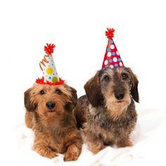 Verjaardagskaart Teckels met feestmuts