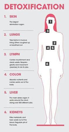 DETOX - 6 Main Detox Organs (Skin, Lungs, Lymph, Colon, Liver, & Kidneys) & Their Functions.