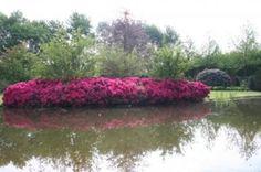 Hovenier Twan Brinkman #Hovenier #tuinadvies #tuinaanleg #tuinonderhoud #tuinontwerp #planten #terrassen #tuinrenovatie