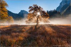 Don Smith Photography: Sunrise Through Elm, Yosemite National Park, California Sierra Nevada, Yosemite National Park, National Parks, Grand Parc, Beautiful Morning, Landscape Photographers, Cool Pictures, Beautiful Pictures, Sunrise