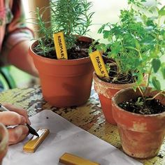 Use those little leftover tiles to create cute plant markers. | Photo: Kristine Larsen | thisoldhouse.com