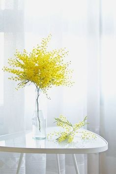 Simple Mimosa Flowers Arrangement in Tall Glass Vase/Bottle.
