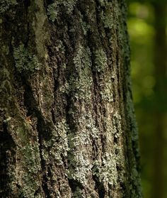 Touch: trees, bark, leaves and wood