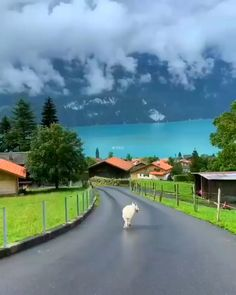 "Lake Brienz Switzerland Lake Brienz Switzerland,Places to travel ❤❤❤ Related posts:- ᜤ "" - Ski mask Amazing Places To Visit On A Vacation To Iceland - Beautiful placesawesome LATIN MUSIC – Album –. Beautiful Places To Travel, Wonderful Places, Beautiful World, The Places Youll Go, Cool Places To Visit, Places To Go, Places In Switzerland, Hetalia Switzerland, Vacation Places"