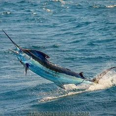 Freedom fighter,  swordfish.  Saltwater fishing - Seatech Marine Products  Daily Watermakers