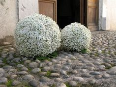 Forever Wedding Planner: Un fiore elegante e versatile: la Gipsofila Wedding Church Aisle, Wedding Aisle Outdoor, Diy Wedding Deco, Chic Wedding, Gypsophila Wedding, Wedding Bouquets, Baby's Breath Wedding Flowers, Flower Centerpieces, Ceremony Decorations