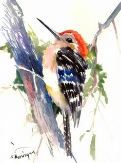 Watercolor Red Headed Woodpecker Print Artist Eric Sweet