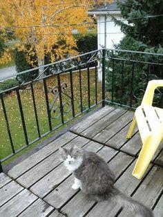 Lost Cat - Domestic Long Hair - Kingston, ON, Canada K7M 2G8