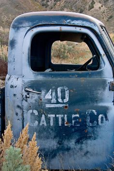 40 Cattle Co