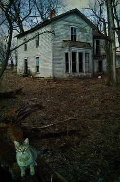 Abandoned farmhouse (and beautiful cat) near Columbus, Ohio.