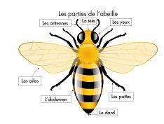 Capture d'écran 2015-01-24 à 16.52.58 L'abeille Daycare Themes, Classroom Themes, French Education, Kids Education, Bee Rocks, Grade 2 Science, Alternative Education, Kindergarten Art Projects, Bug Crafts