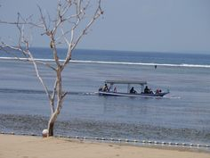 Bali. Fishing at low tide.