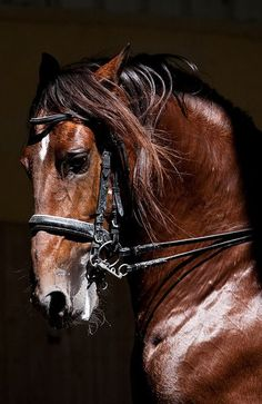 This horse's head and neck are being forced into an unnatural and painful position known as rollkur. Stick up for the horse, don't support the equestrian Olympics when the judges give points for this! Most Beautiful Animals, Beautiful Horses, Beautiful Creatures, Beautiful Pictures, Animals And Pets, Cute Animals, Wild Animals, Baby Animals, Majestic Horse
