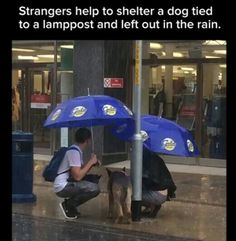 faith in humanity restored Sweet Stories, Cute Stories, News Stories, Animals And Pets, Funny Animals, Cute Animals, Pekinese, Human Kindness, Faith In Humanity Restored