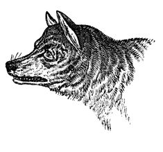 Vintage Clip Art - Wolves & Wolf Skull - The Graphics Fairy