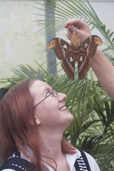 K with Atlas Moth | Flickr - Photo Sharing!