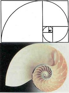Fibonacci sequences appear in biological settings, in two consecutive Fibonacci numbers, such as branching in trees, arrangement of leaves on a stem, the fruitlets of a pineapple, the flowering of artichoke, an uncurling fern and the arrangement of a pine cone.
