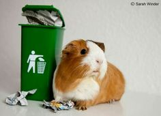 I wish my pigs would take out the trash instead of making it. ;)