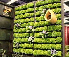 The gorgeous green living wall is not an idea that is solely exclusive to the modern world. Beautiful green gardens that were precariously hanging onto the walls of structures have also graced ancient times. While the Hanging Gardens of Babylon are considered one of ancient world's greatest wonders, many modern living wall projects bring the same joy and delight in smaller packages! Brilliant, audacious and fresh, living walls are indeed a great addition to any contemporary residence. But…