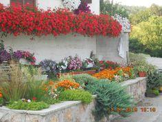 NapadyNavody.sk | Ako sa starať o muškáty čo najlepšie, aby sa vám odmenili bohatými žiariacimi kvetmi Gardening, Plants, Garden Ideas, Decor, Decoration, Lawn And Garden, Plant, Landscaping Ideas, Backyard Ideas