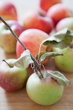 rustic apple - Google Search
