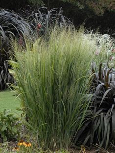 13 Terrific Tall Grasses | HGTV