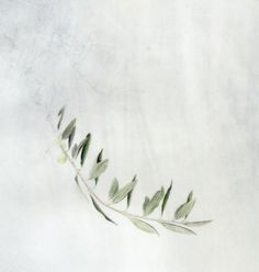 kelly leahy radding ~ watercolor olive branch