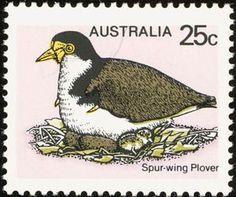 Spur-winged Lapwing / Plover (Vanellus spinosus)