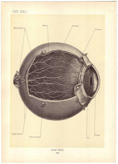 Old medical illustration. this would be cool in frame on the med shelf, huh @Cacey Stout Peters?