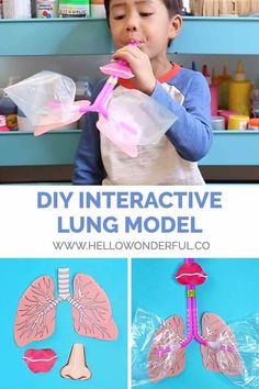 Make a DIY lung model for learning lung anatomy with kids. You are in the right place about Human Body System anatomy Here we offer you the mo Science Projects For Kids, Preschool Science, Preschool Learning, Science For Kids, Science Activities, Toddler Activities, Preschool Activities, Teaching, Diy Projects