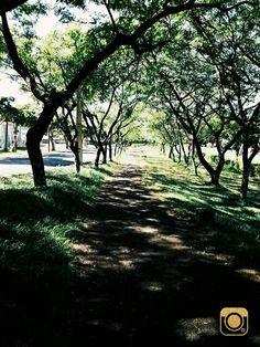 Linha verde ... Arapoti,Pr