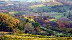 vigneti e boschi  dell' Alto Monferrato