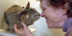 Ter um gato em casa faz bem à saúde! Comprovado por 7 estudos científicos!