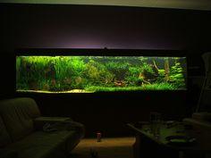 Aquarium with Discus fish by GOFORUS