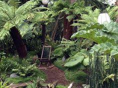 Temperate Plants for a Tropical Look : Archive : Home Garden Television Tropical Backyard, Tropical Landscaping, Tropical Plants, Garden Landscaping, Tropical Gardens, Australian Tree Fern, Tropical Greenhouses, Sacred Garden, Ferns Garden