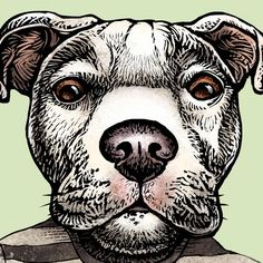 """Signed portrait of Pawblo Picasso by Chet Phillips.  This signed portrait print by Chet Phillips is from the series """"Artistic Pets."""" Pit Bull dog portrait of artist Pablo Picasso. The series creates famous authors as dog and cat personalities."""