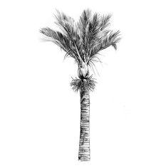 Illustrator Kalos's latest beautiful NZ Native is the Nikau, or Rhopalostylis Sapida! Sunset Tattoos, Palm Tattoos, Tropical Flower Tattoos, Tropical Flowers, Palm Tree Print, Palm Trees, Kauri Tree, Nz Art, Kiwiana