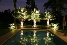 Landscaping lighting on poolside palm trees - Decoist