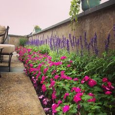 Vinca and Salvia flower bed - for the front of the house