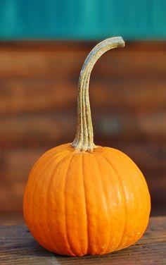 Just a pumpkin Halloween Season, Halloween Pics, Happy Halloween, Halloween Costumes, Vintage Halloween Cards, Hot Apple Cider, Autumn Day, A Pumpkin, Art Festival