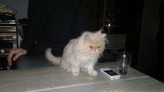 As a kitten