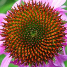 Fibonacci ...wow color